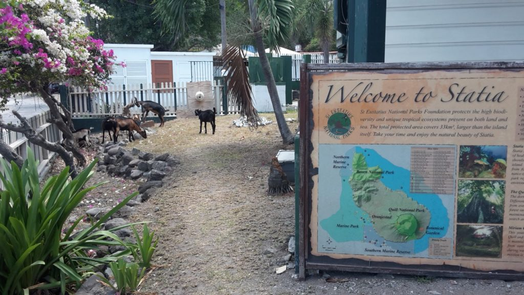 The St. Eustatius National Parks Foundation office and one of the main threats on Statia: roaming livestock!
